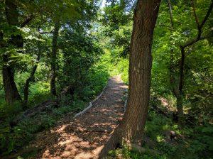 private Central Park tours