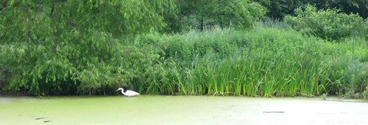 Turtle Pond
