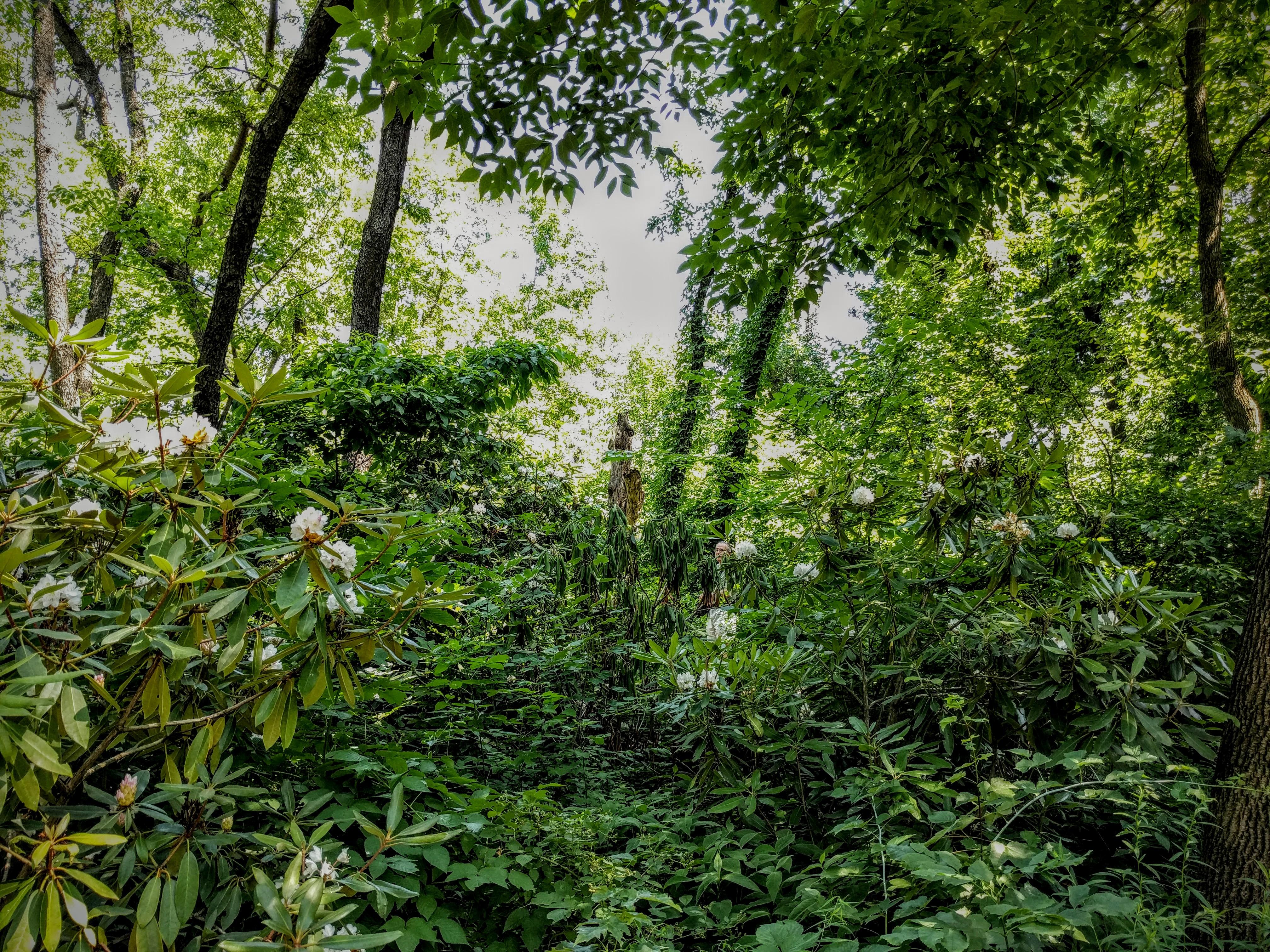 Hallett's Wild Woodland